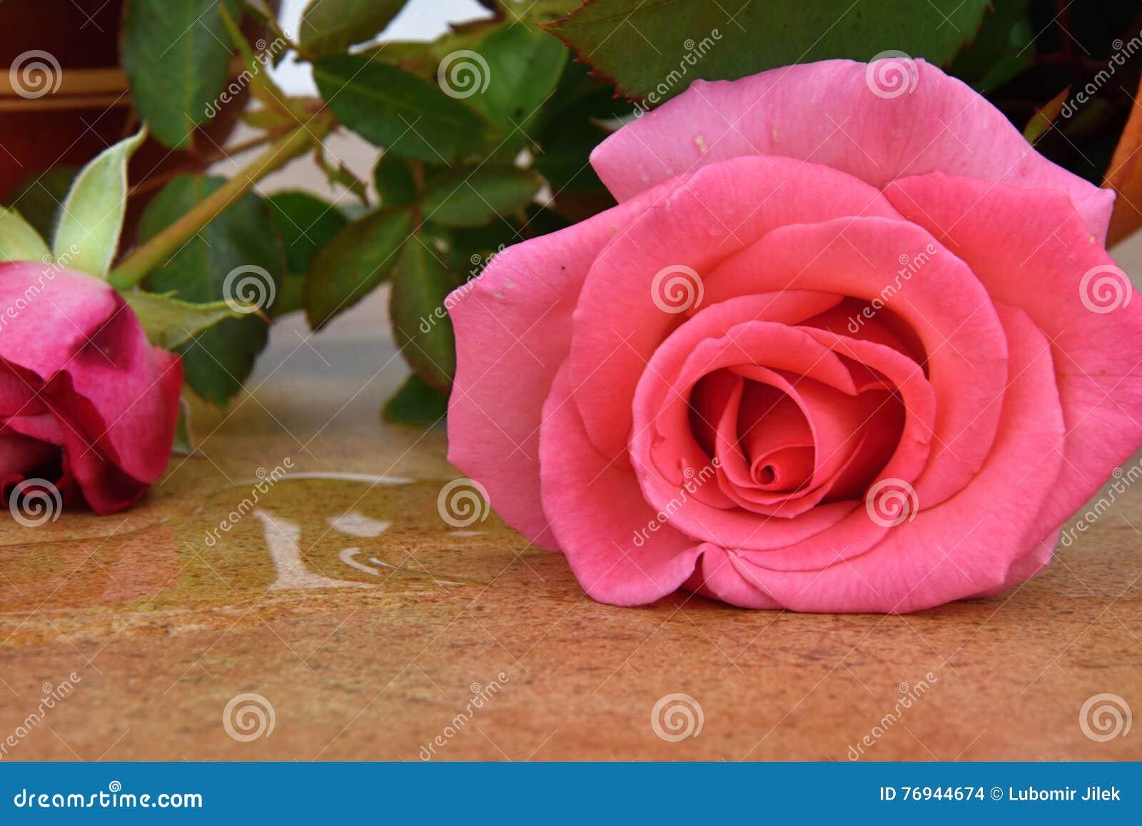 Rovesci il vaso di fiore con le rose vaso sulle piastrelle di
