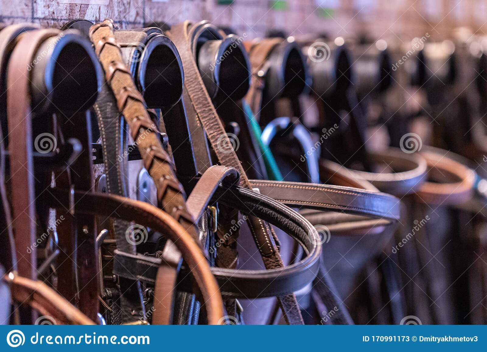 315 Tack Room Photos Free Royalty Free Stock Photos From Dreamstime