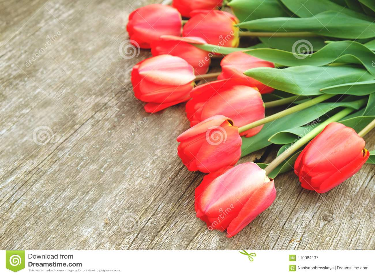Row of bright rich red tulip flowers on stem. Wooden background with scopy text space. Welcome spring and summer. Mother`s Day ba