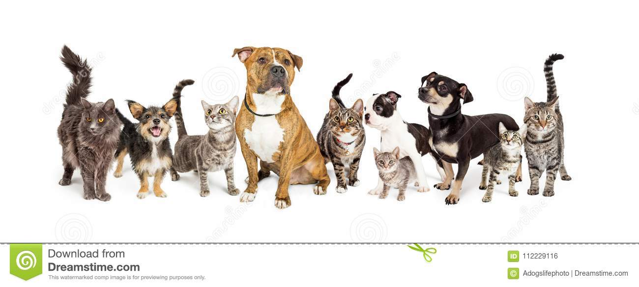Row Of Cats And Dogs Together On White Stock Photo - Image of cute, kitten:  112229116