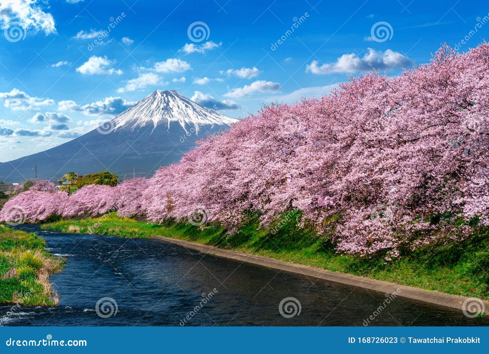 Pins Japanese Mt Fuji Cheery Blossom from Kyoto Japan