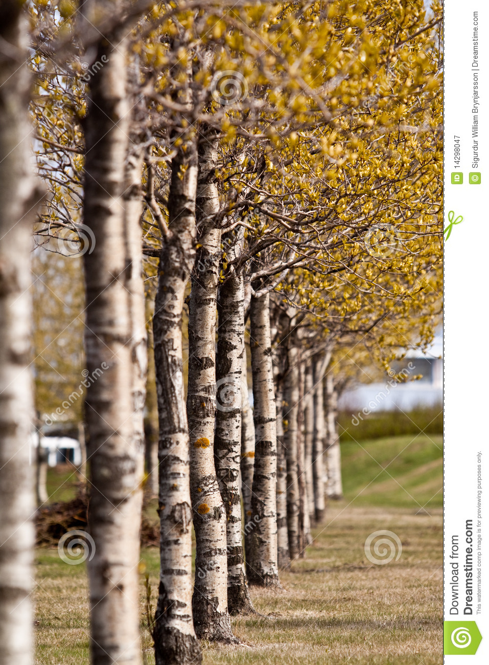 Row of colorful Spring trees