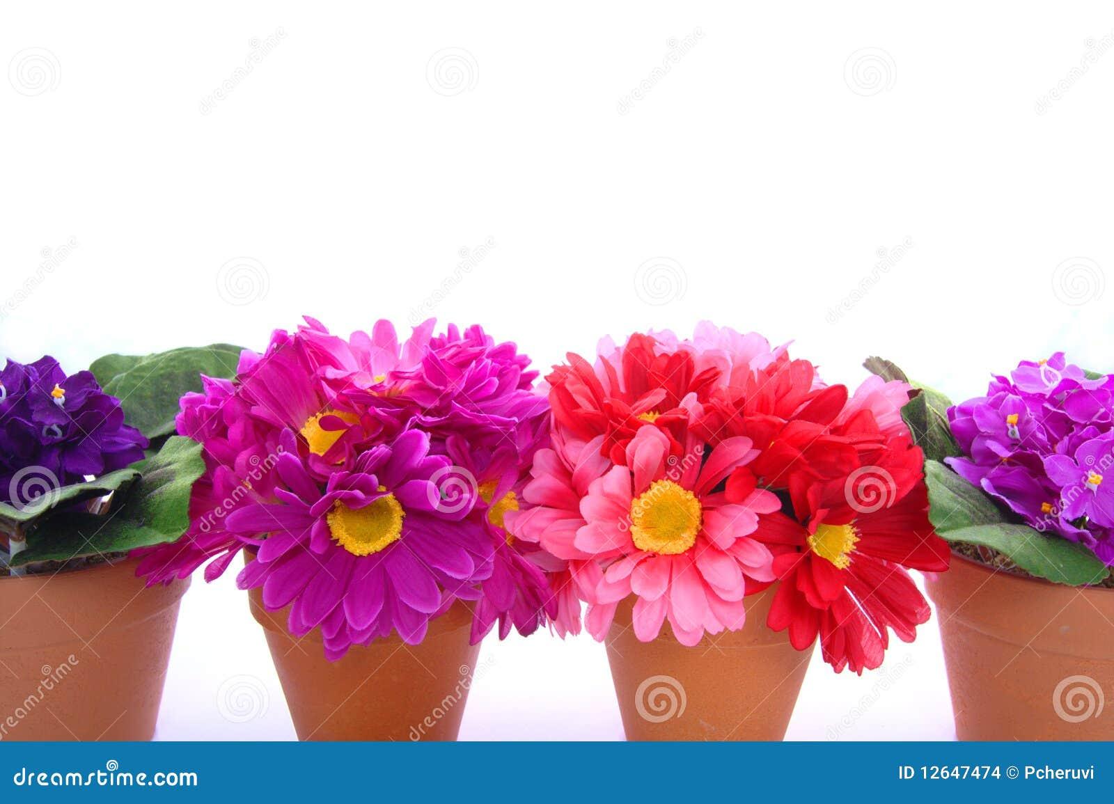 Row of flower pots