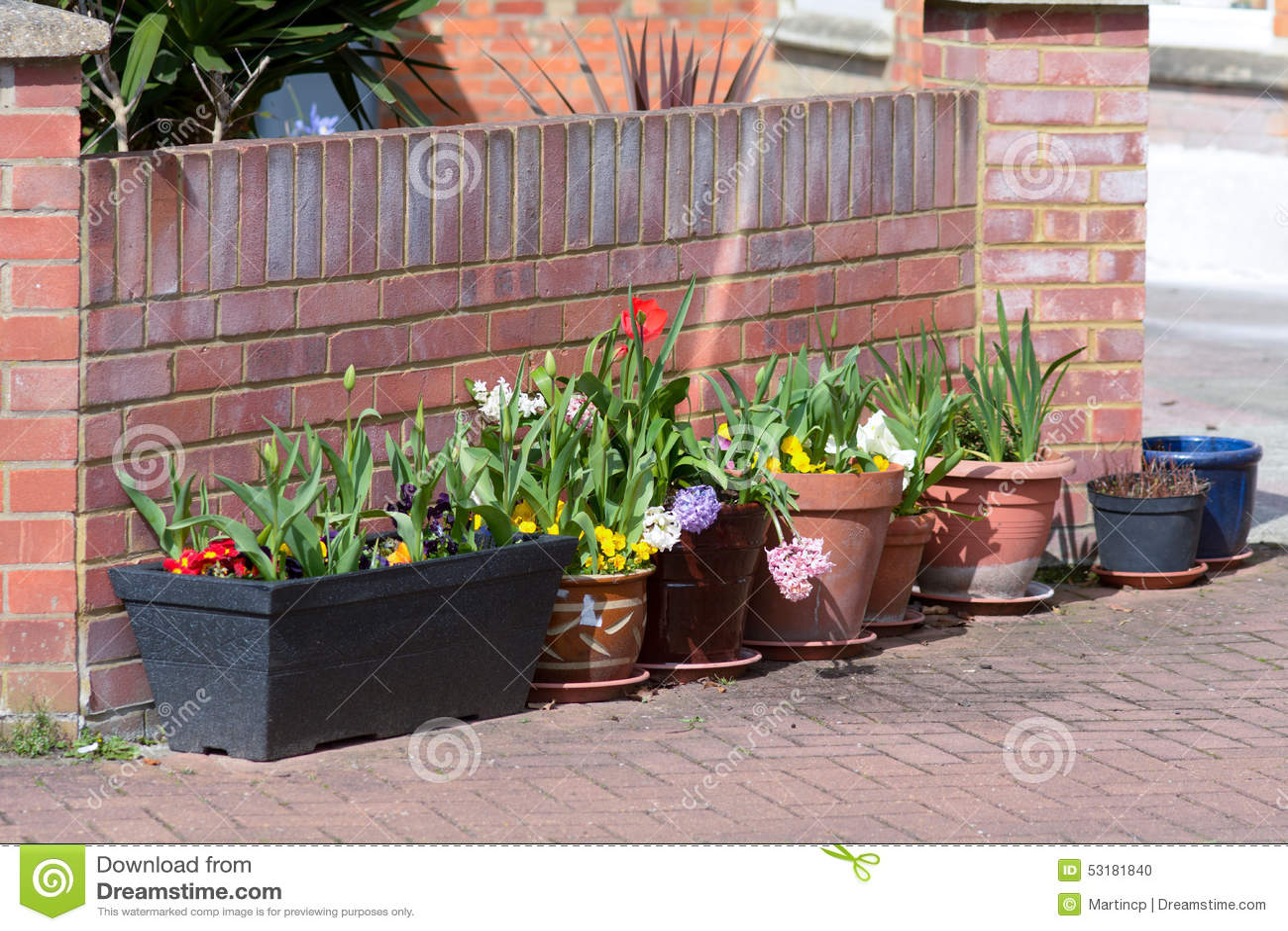 Row Flower Garden : Row of flower pots in garden stock photo image