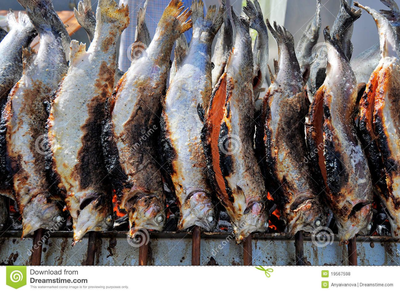 Row of grilled brown trouts