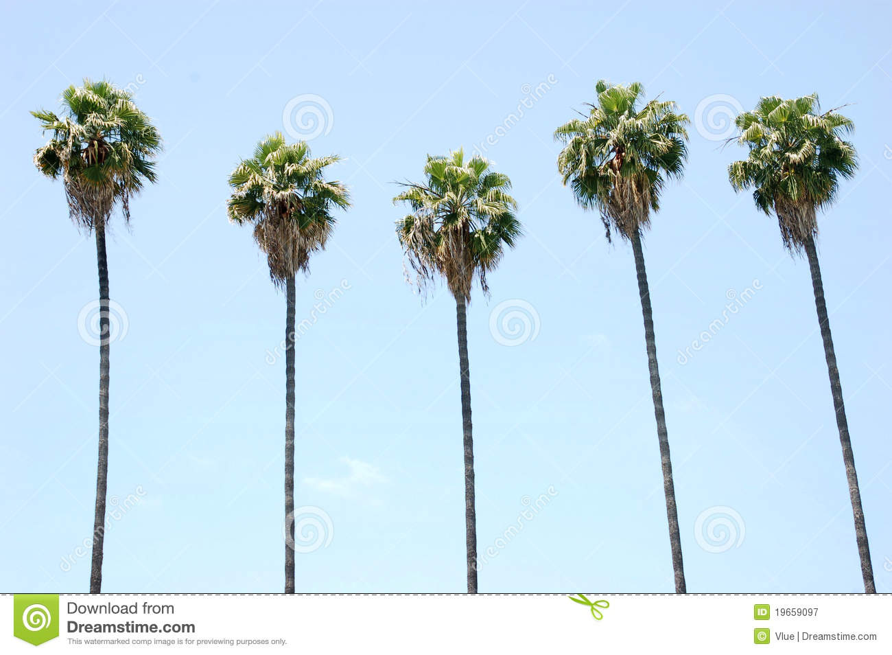 row of palm trees royalty free stock photography image 19659097
