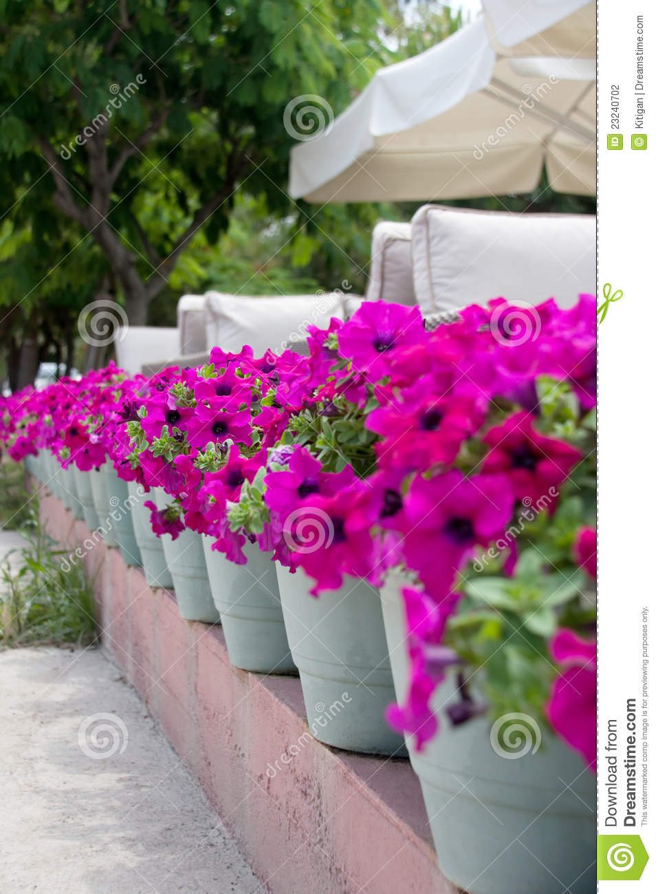 Row of potted flowers stock photo image of potted green 23240702 row of potted flowers mightylinksfo