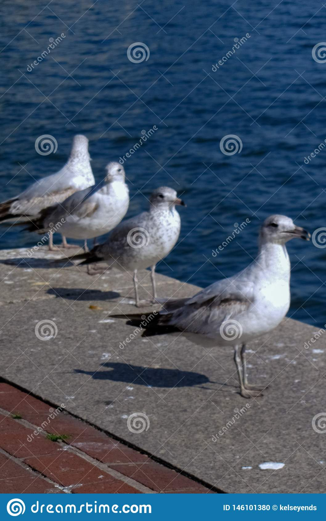 Row of Seagulls Along Pier