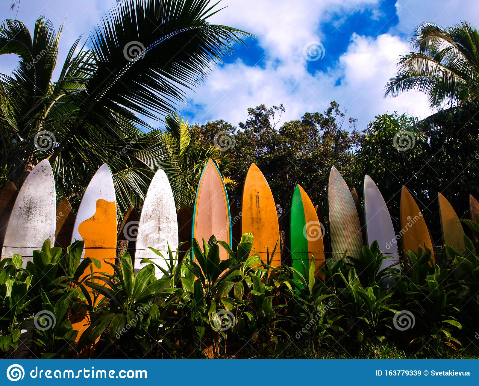 Row Of Colorful Surfboards Staked As A Fence In Hawaii ...