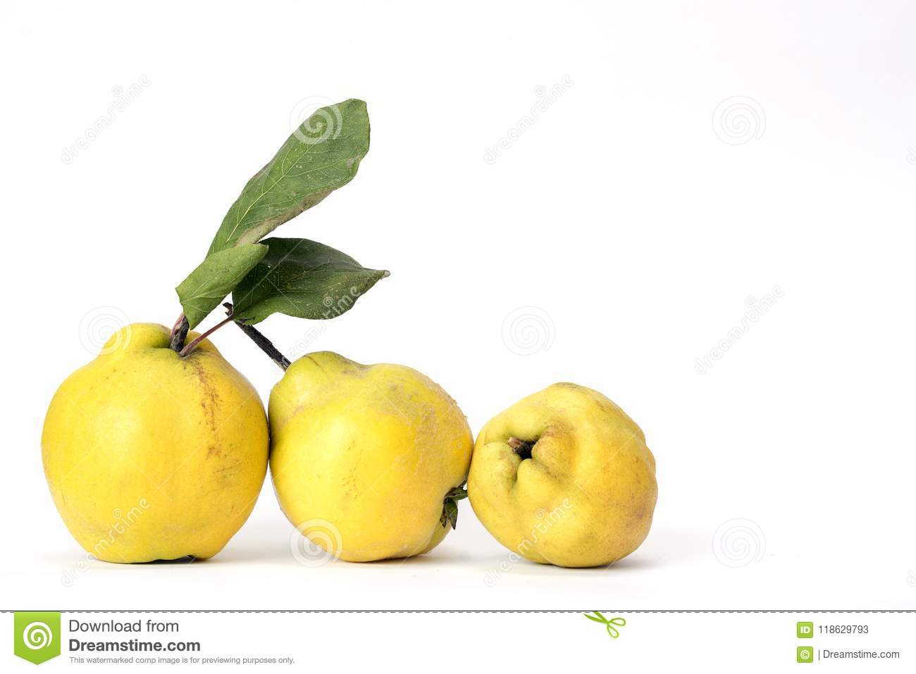 Row of three quinces, an old and traditional kind of fruit, similar to apples and pears