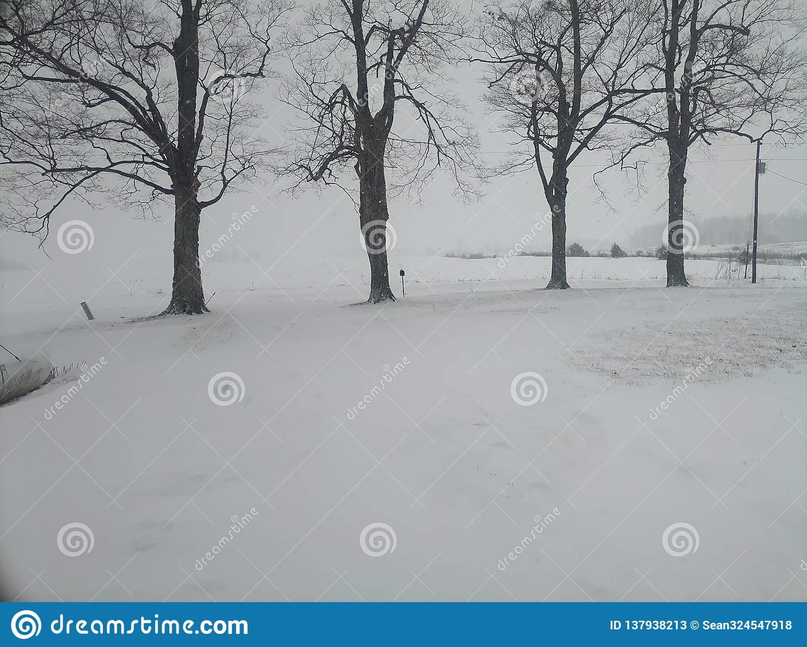 Row of trees during snowstorm