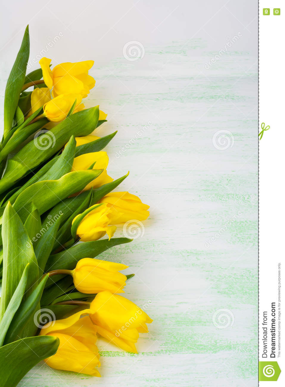 Row Of Yellow Tulips On Light Green Background Vertical Copy Space Flowers Greeting Postcard Flower Frame Spring