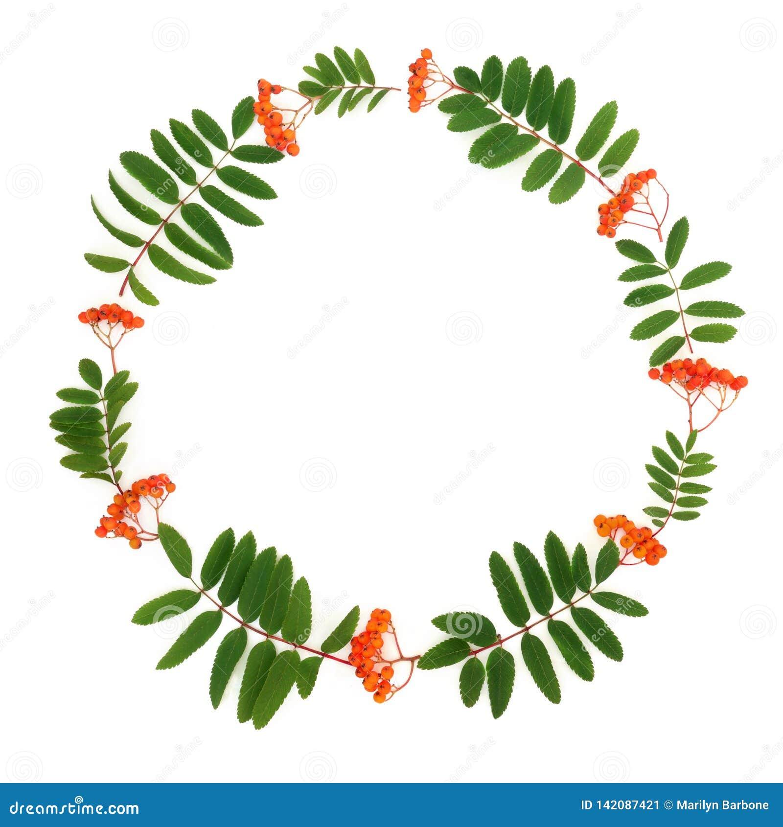 Rowan Ash Berry Wreath