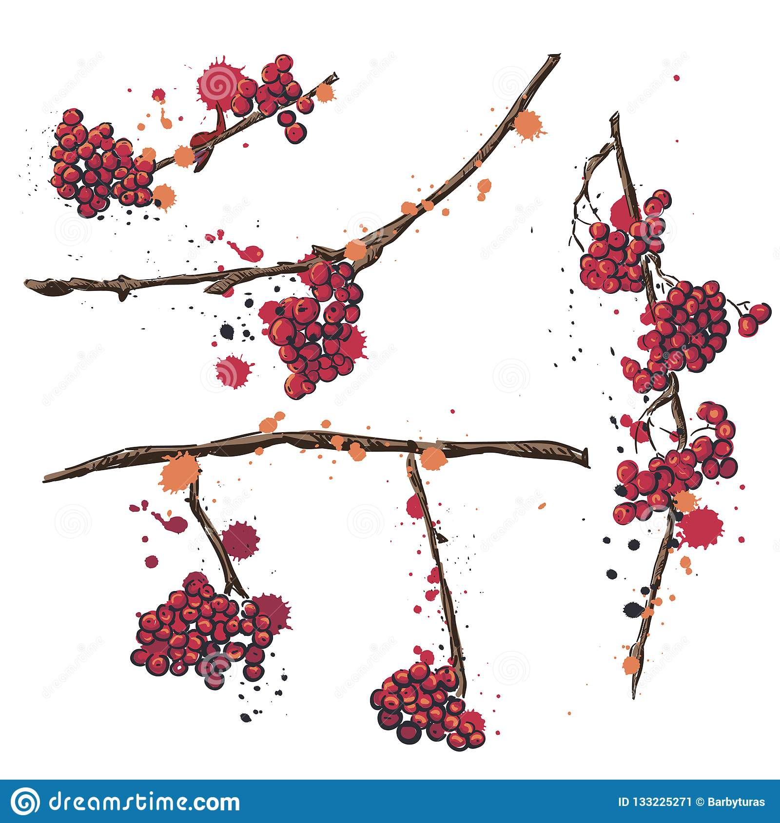 Rowan. Set of vector hand drawn elements. Rowan branch with berries . Set of drawings for cards, banners and advertising