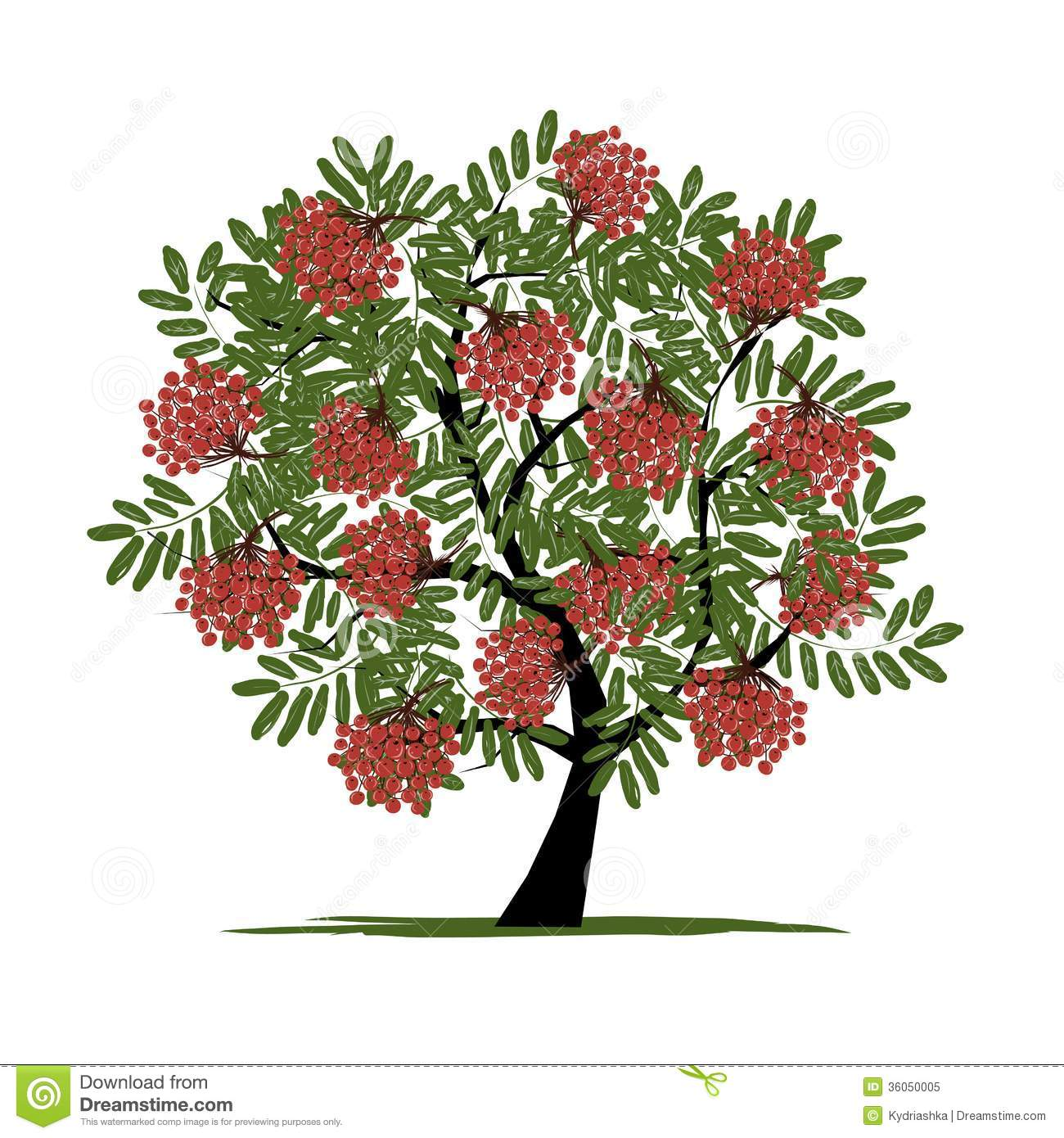 Rowan tree with berries for your design. This is file of EPS10 format.