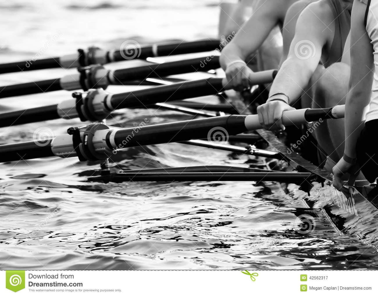 Sweep Rowing Stock Photo - Image: 42562317