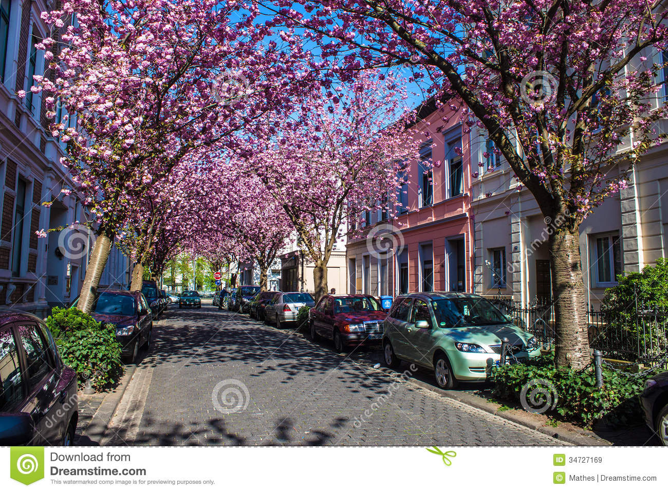 Bonn Germany  city pictures gallery : blossom trees bonn germany april heerstrasse bonn germany april bonn ...