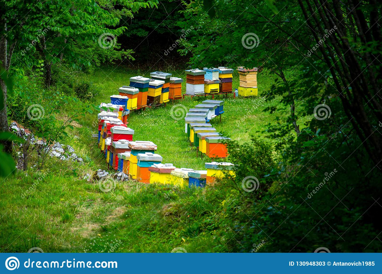 Rows of colourful wooden bee hives in forest meadow clearing