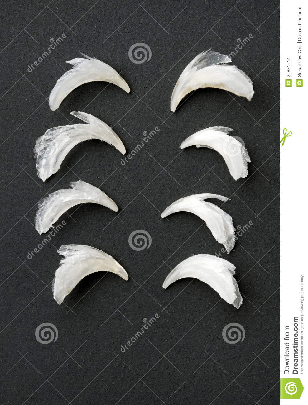 Row Of Cat Claws Stock Photo Image Of Shedded Animal