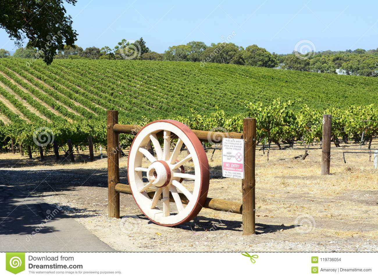 Rows of Grape Vines with wagen wheel gate, Barossa Valley, South Australia.