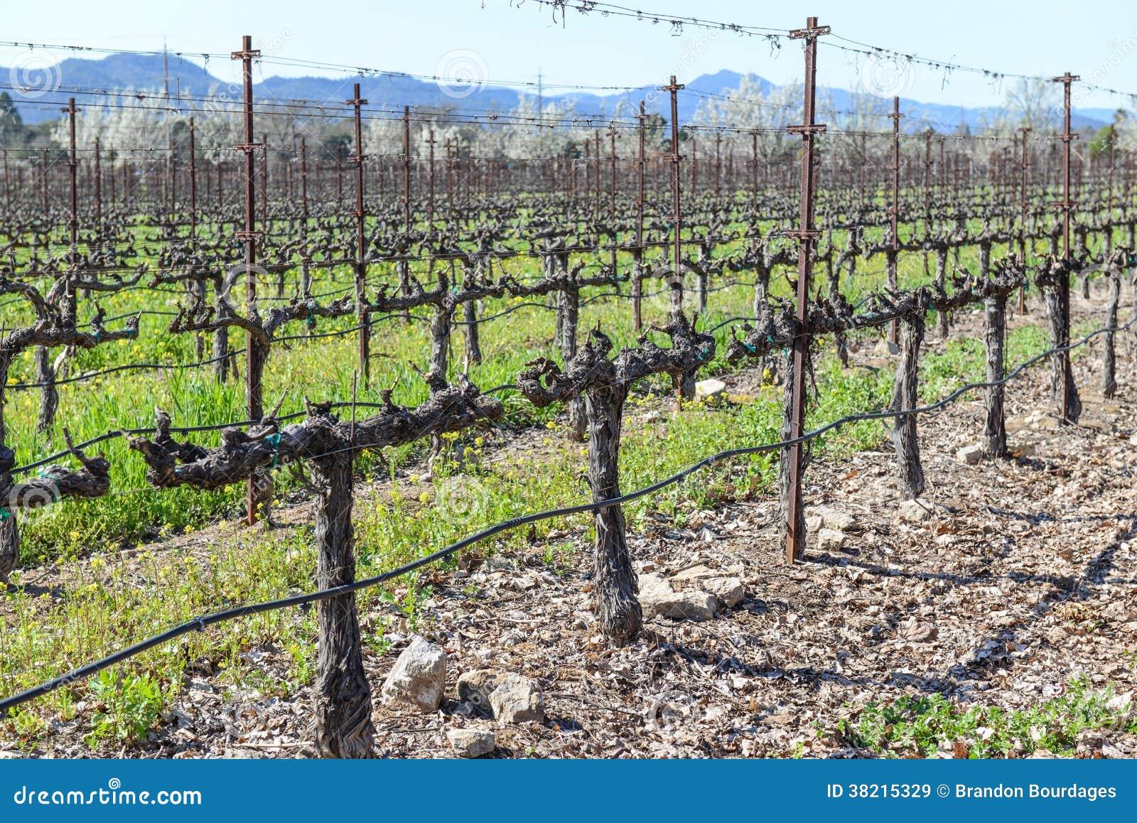 Best Plant Food For Grape Vines