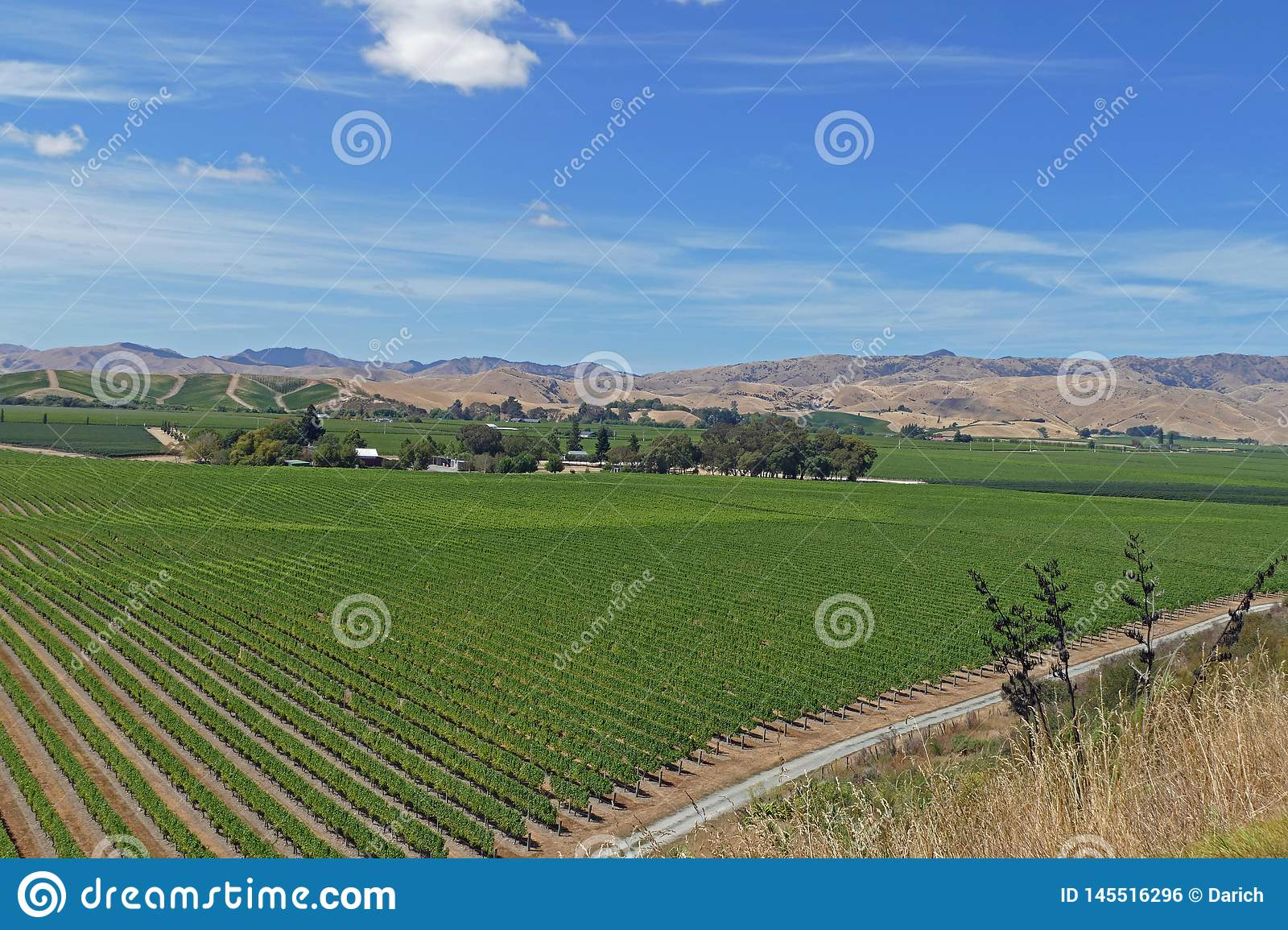 Fine wines from a vineyard in New Zealand