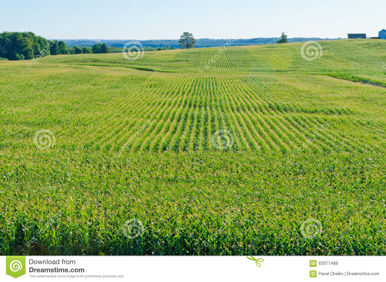 Rows On Green Plant Stock Photo - Image: 63371489
