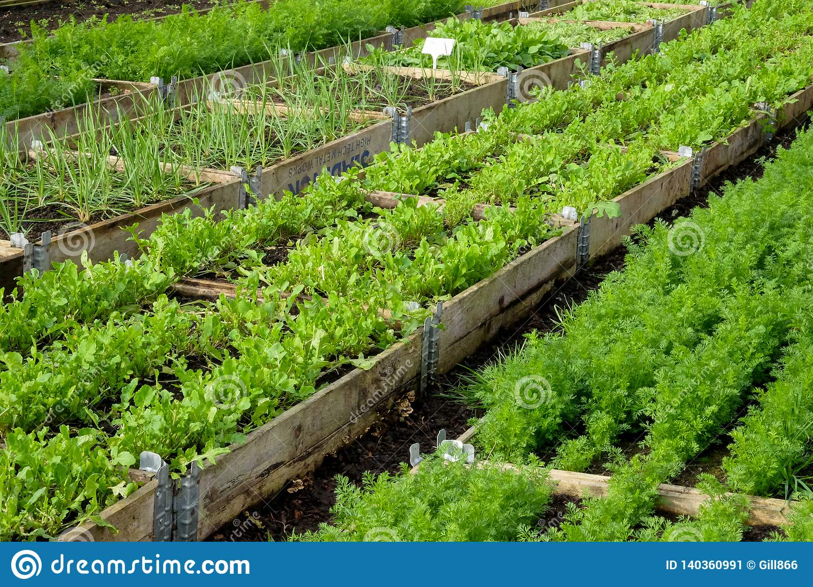 Picture of: Rows Of Raised Vegatable Beds In A Plastic Green House Stock Image Image Of Farm Industrial 140360991