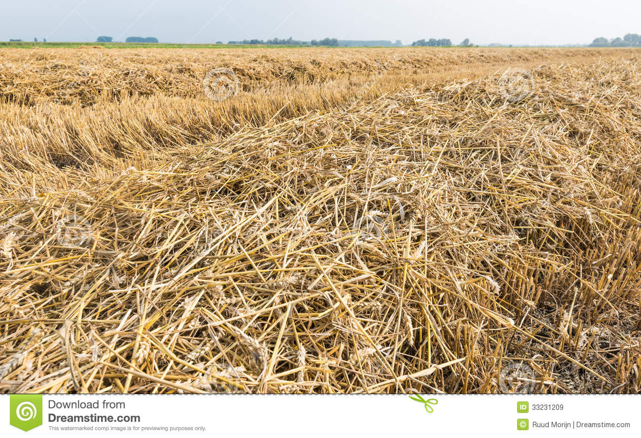 Rows Of Straw And Stubble Stock Image Image Of Natural
