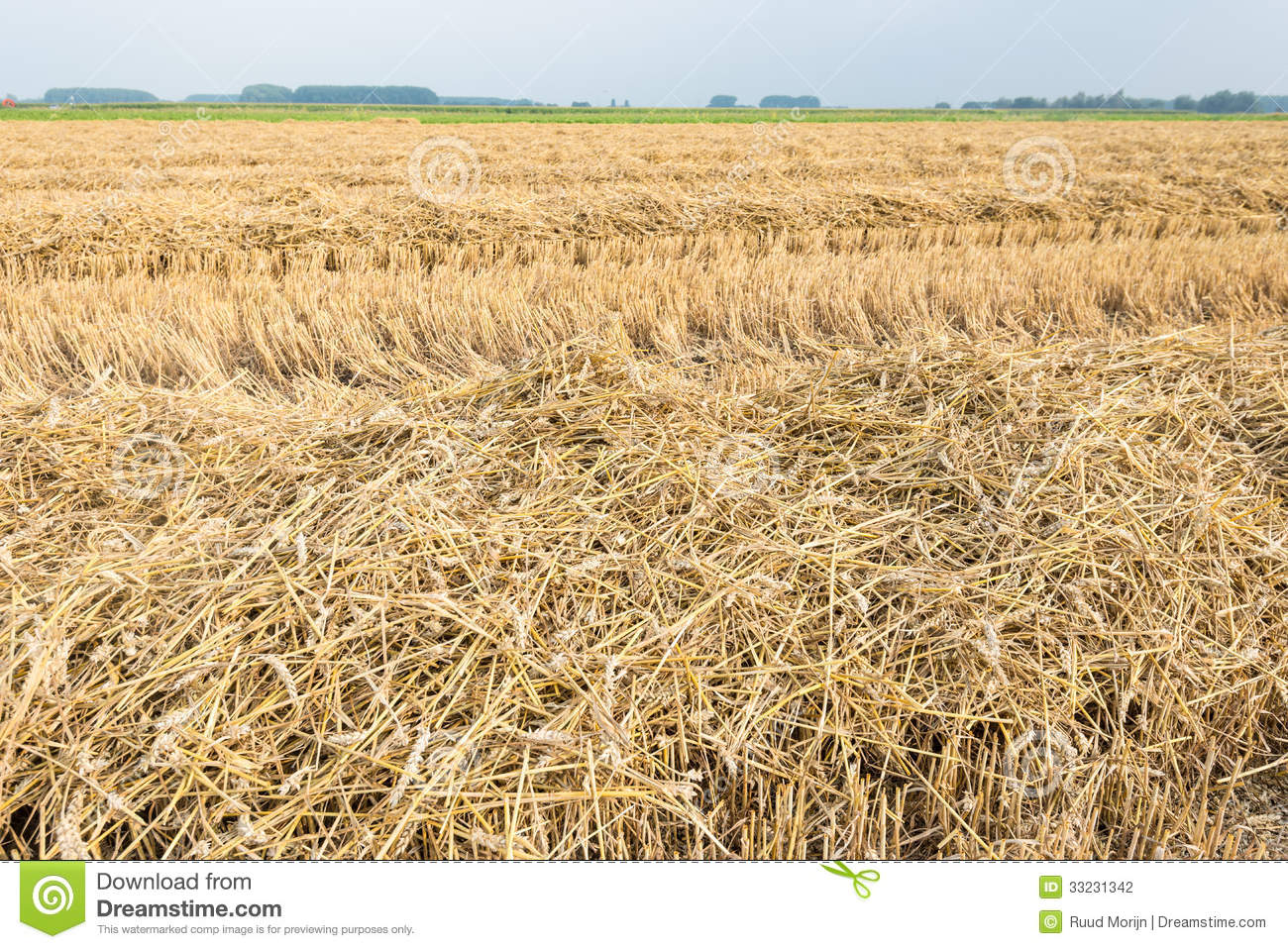 Rows Of Straw And Stubble Stock Photo Image Of Biomass