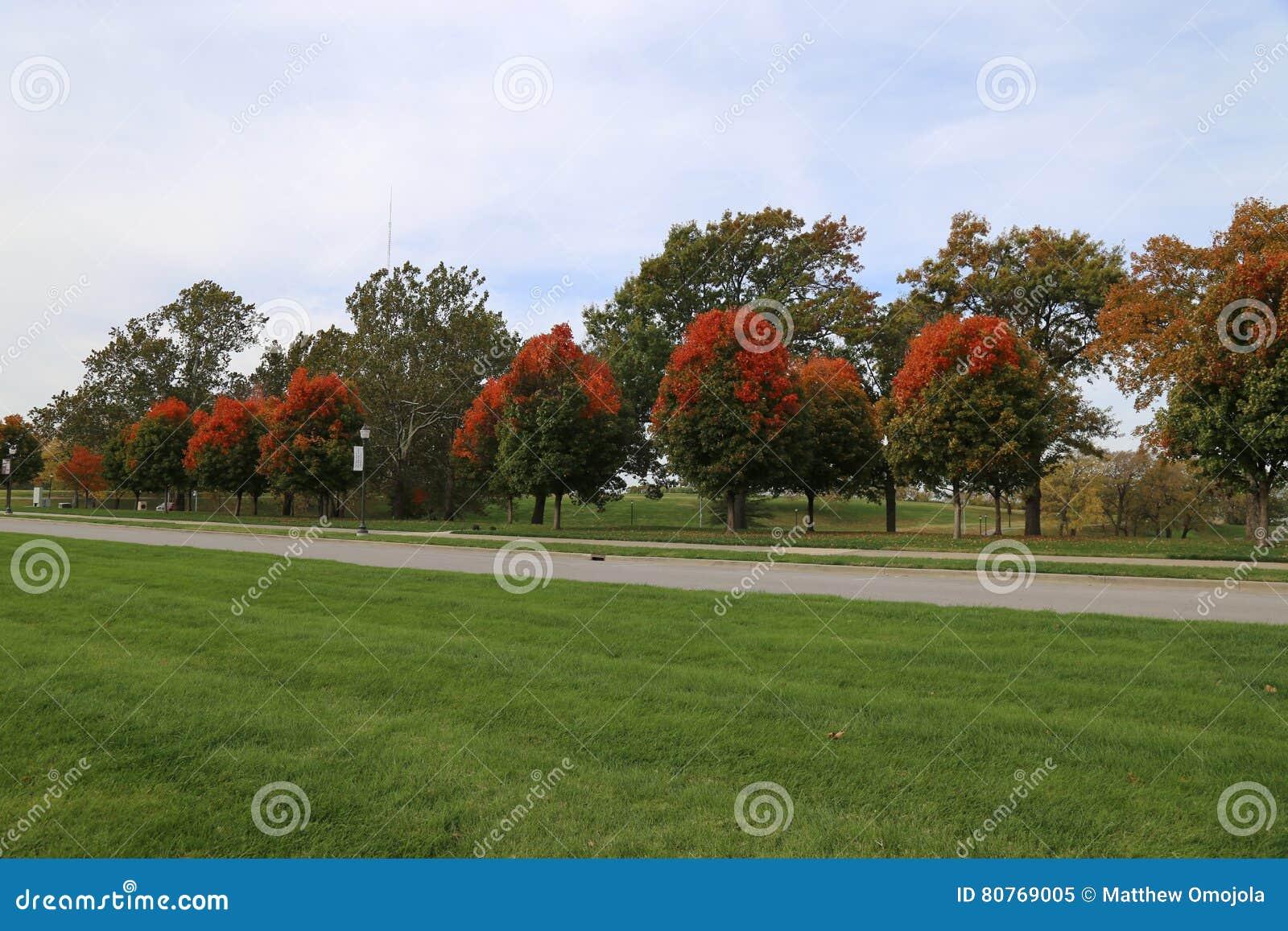 Rows Of Sugar Maple Trees In Kansas City Stock Photo Image 80769005