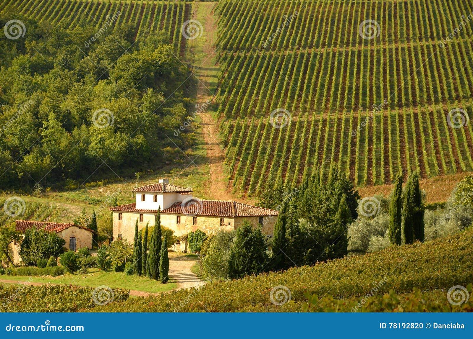 Rows of Vineyard in Chianti, Tuscany