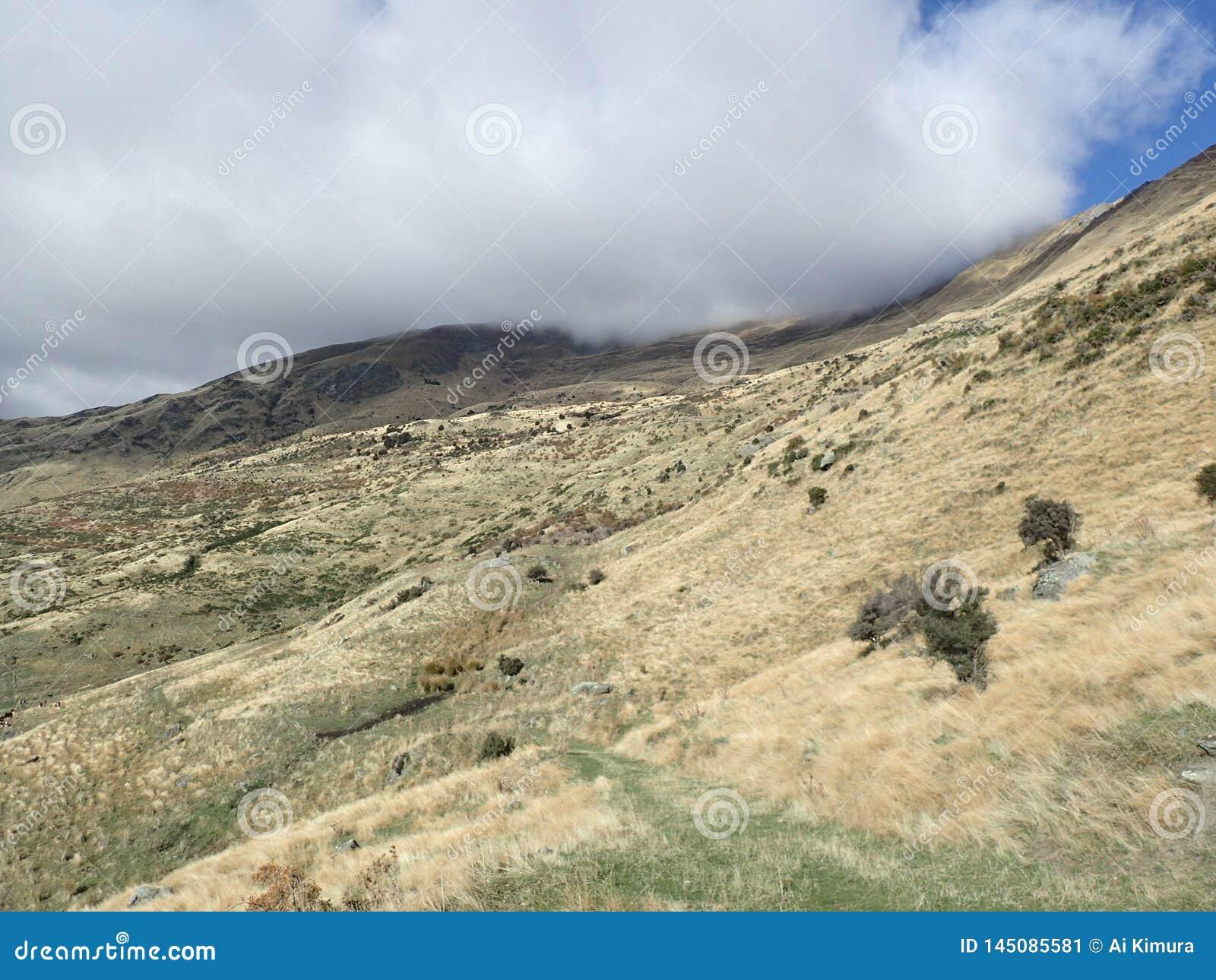 Roy' pico de s em Wanaka