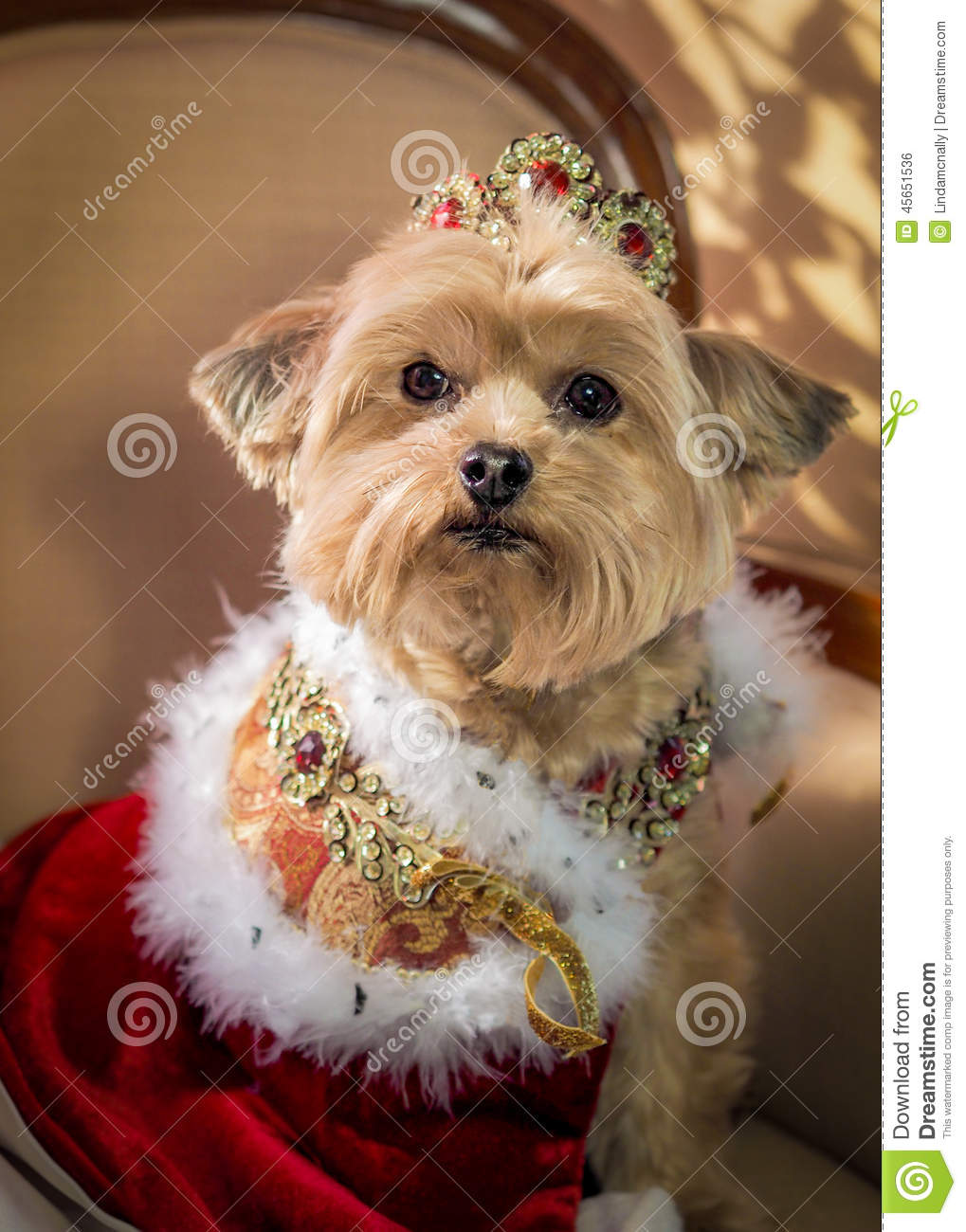 Royal Dog Princess Doggie