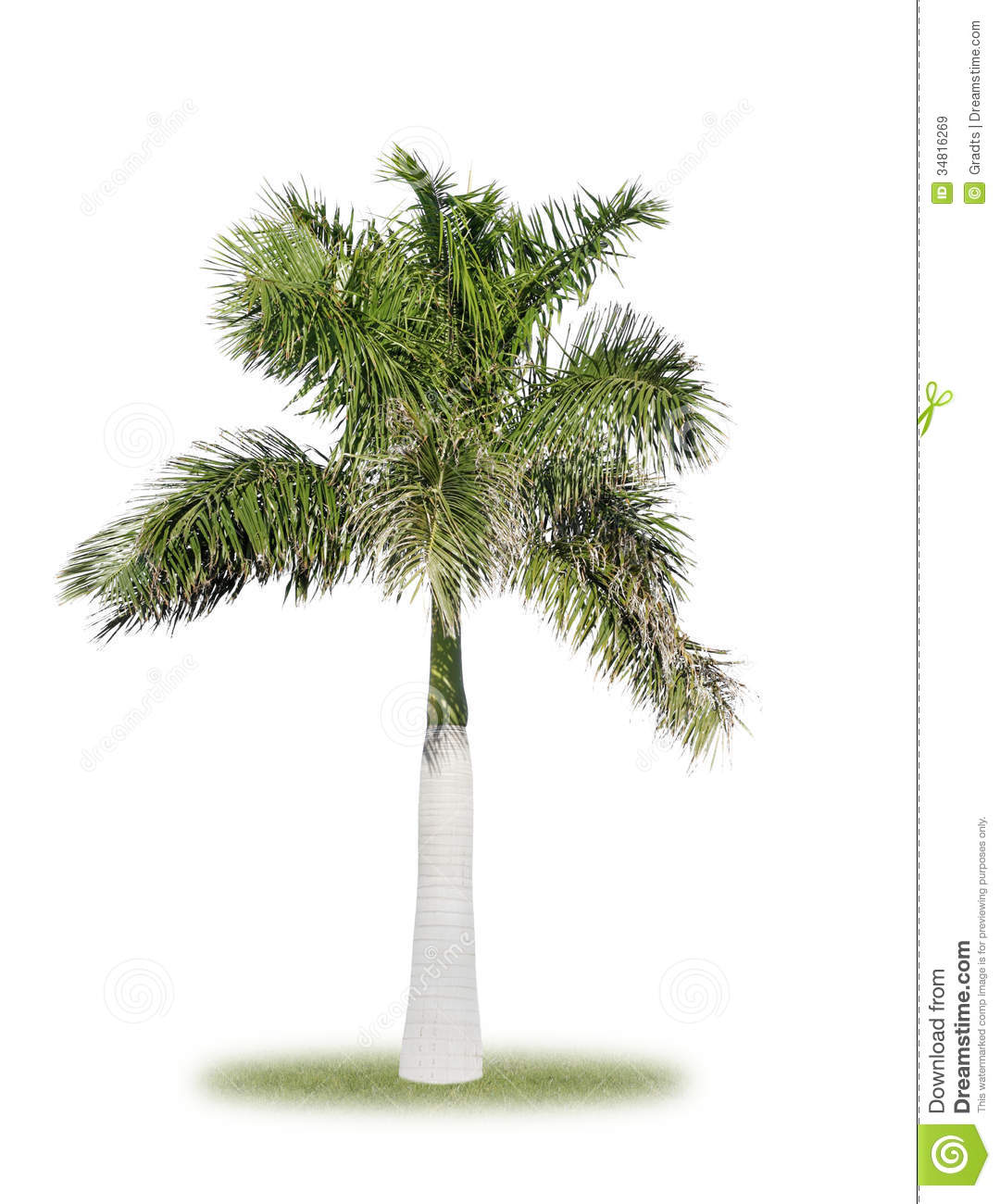Royal Palm Royalty Free Stock Images - Image: 34816269