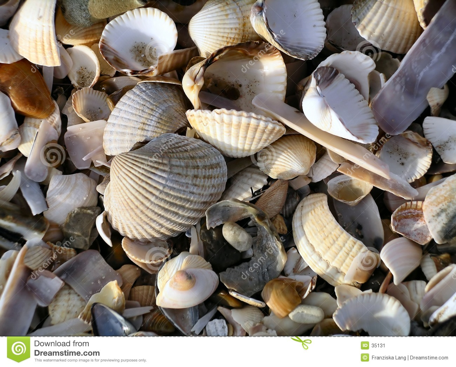 Rozbebeszam seashell kolor