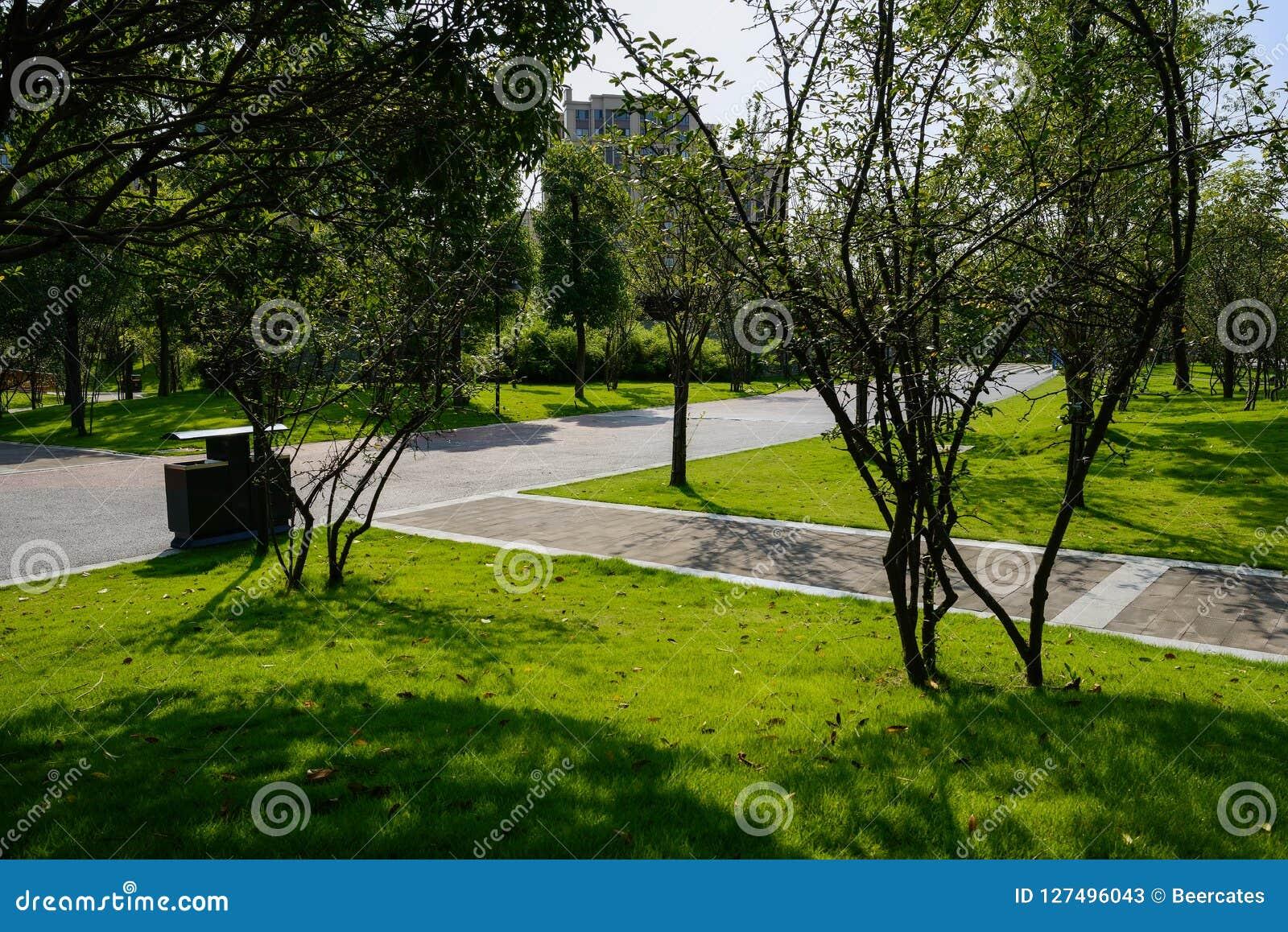 Rozdroże w roślinach i drzewach przed mieszkaniami w pogodnym lecie