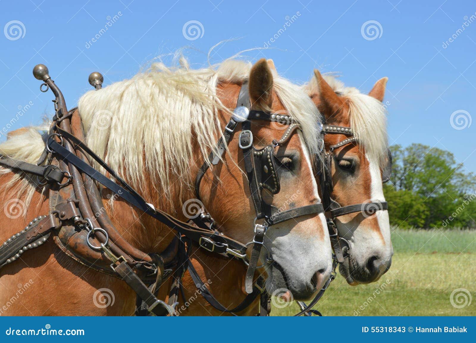 Roześmiany koń