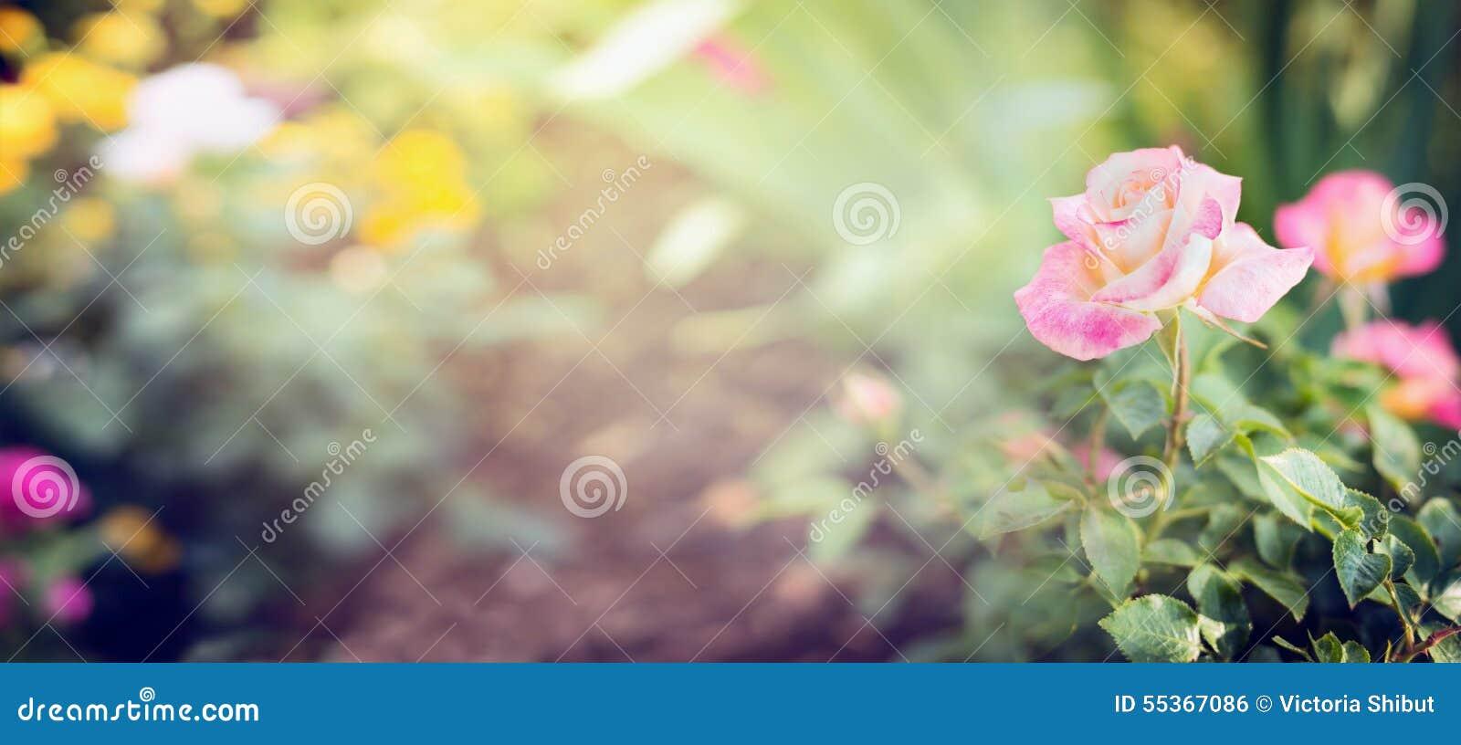 Roze bleek nam in tuin of park op bed van bloemen, banner voor website toe