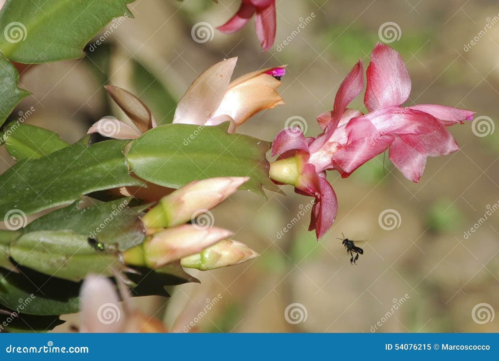 Roze bloem met bijen