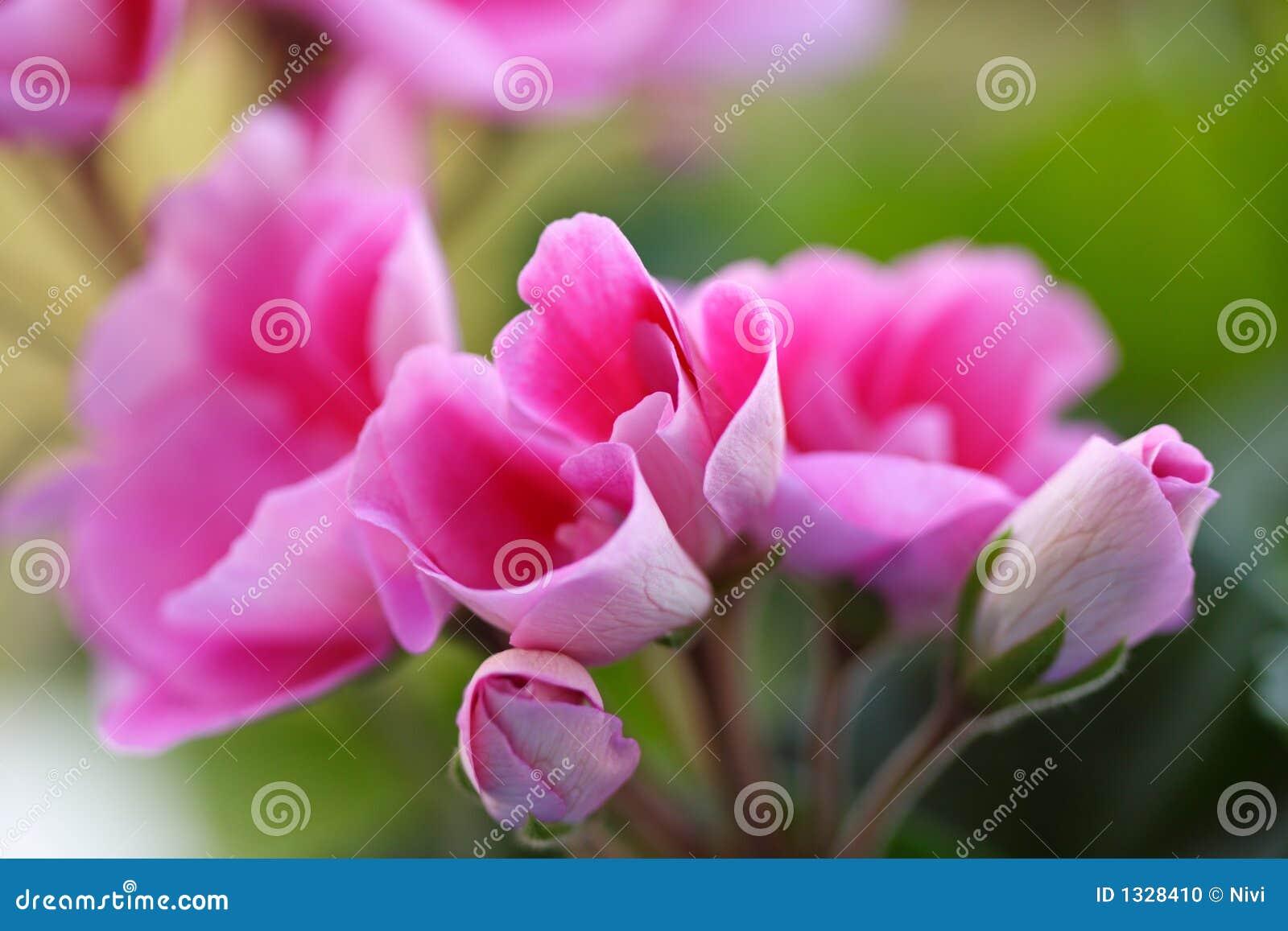 Roze bloemen _2