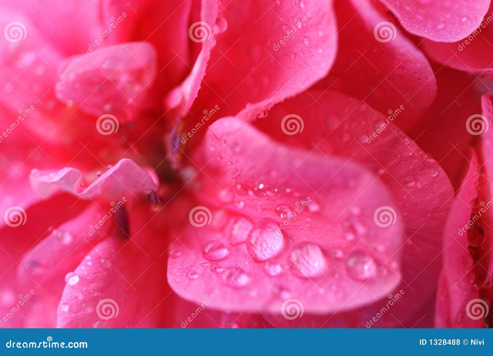 Roze bloemenachtergrond _3