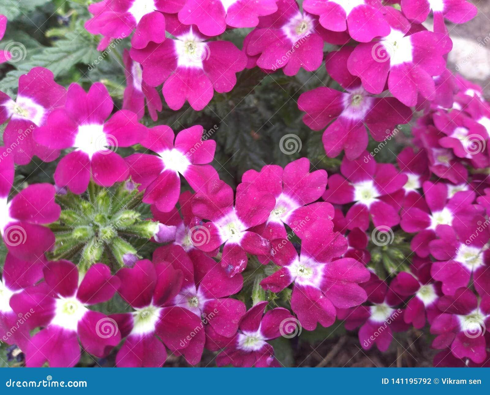 Roze bloemenbos met roze en witte elft