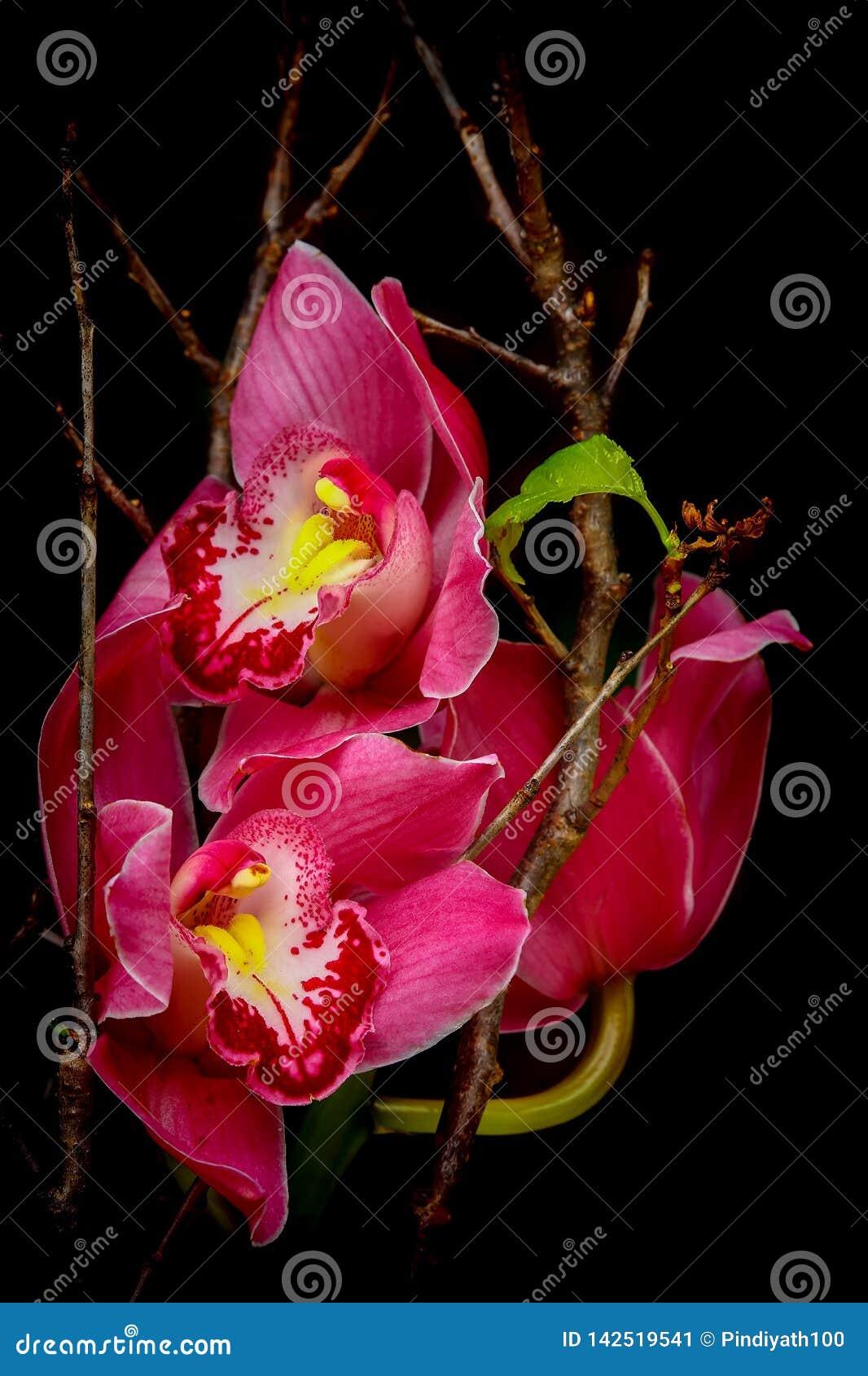 Roze cymbidium of bootorchidee?nachtergrond