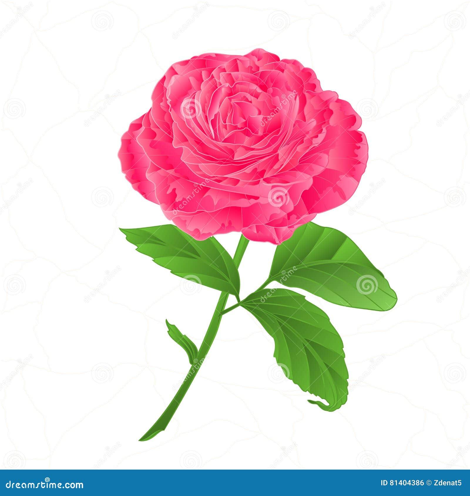 Roze de bloem nam barsten in de porselein uitstekende vector toe