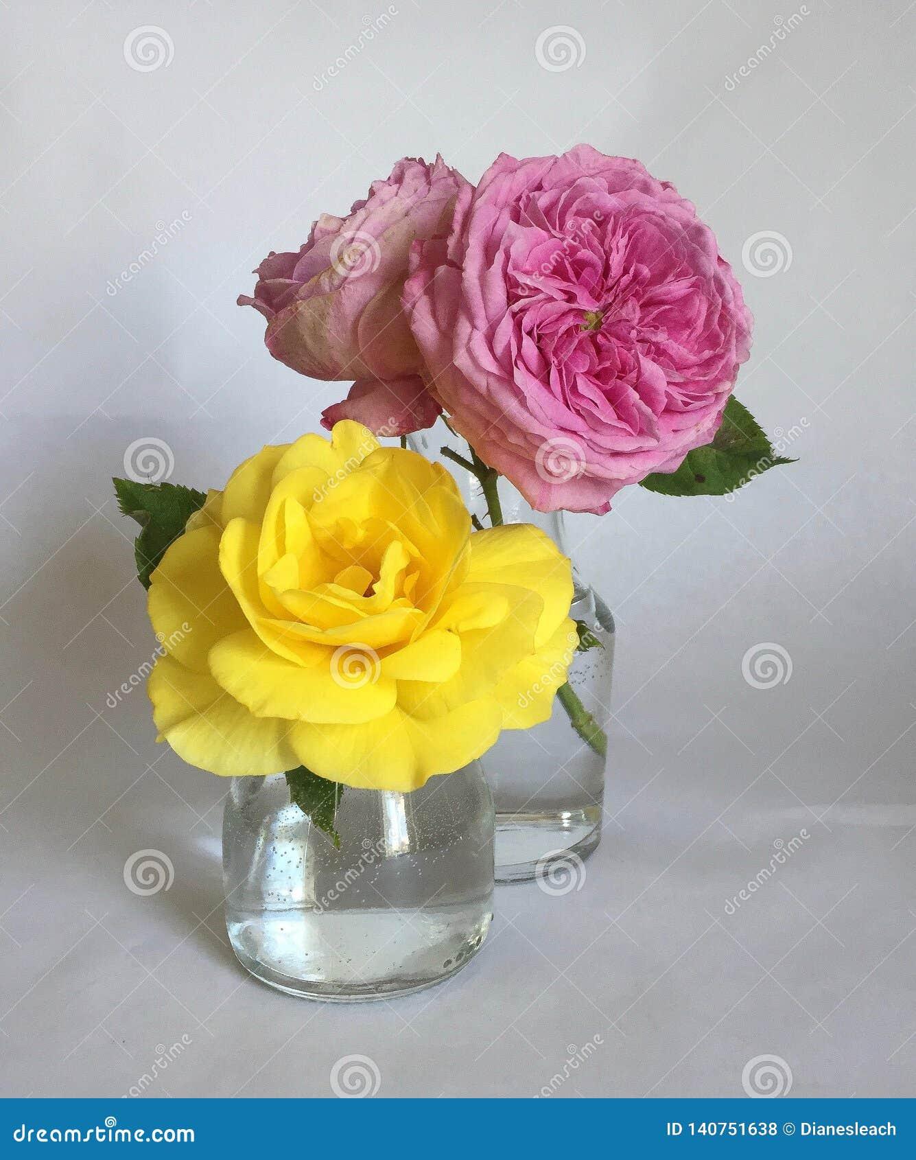 Roze en gele rozen in glasvazen op een witte achtergrond