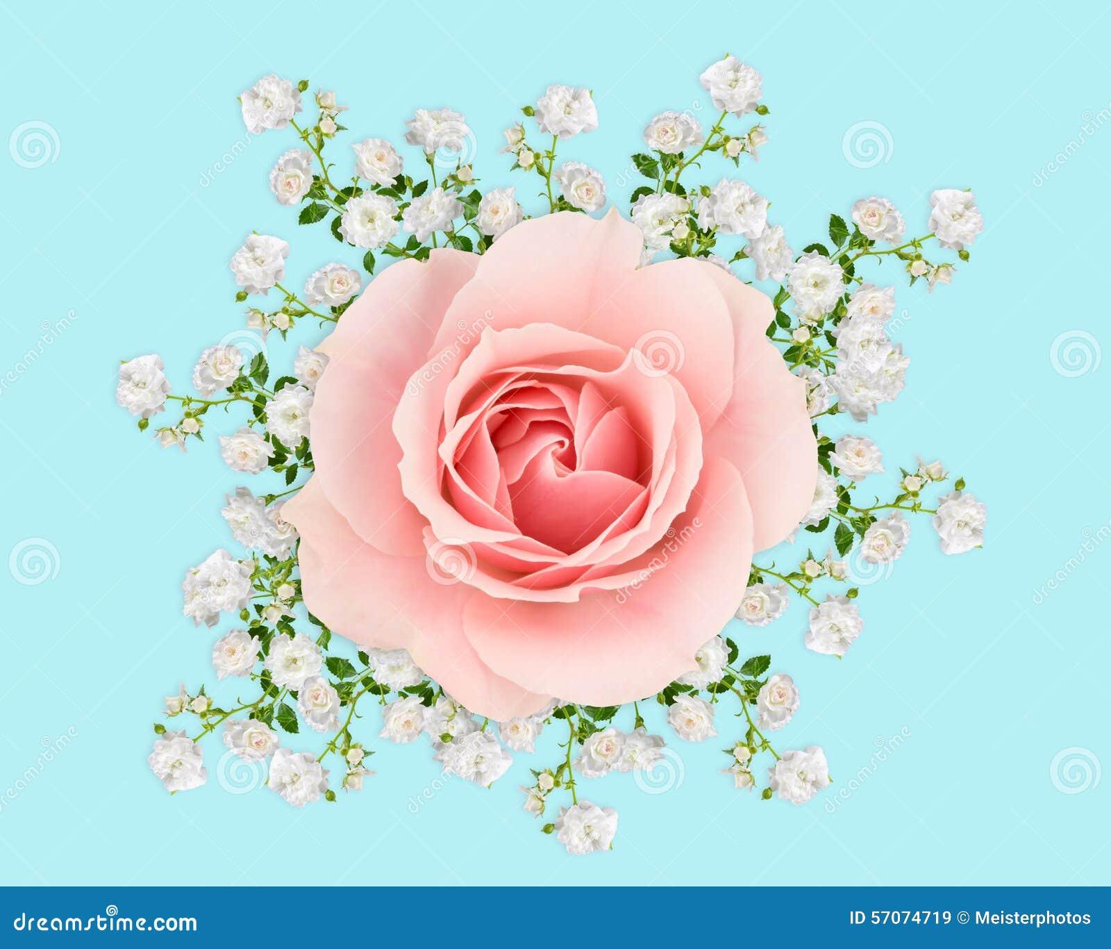 Roze en witte rozen op pastelkleurblauw