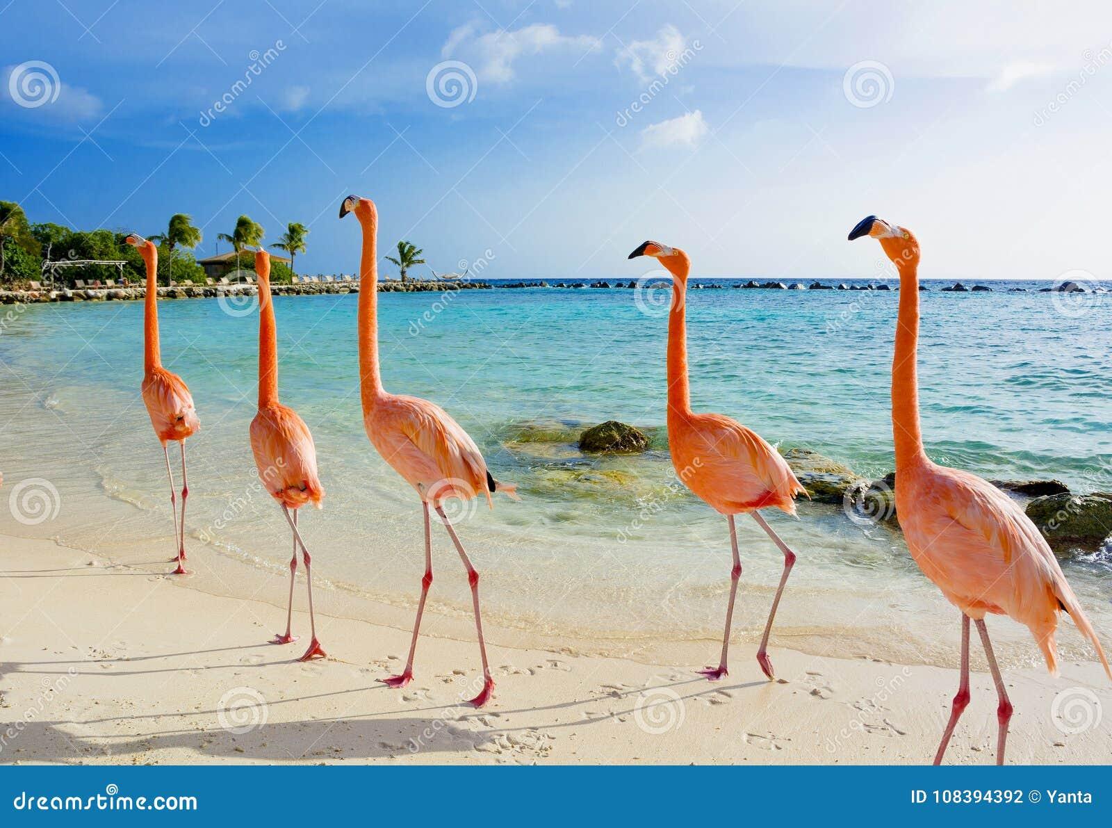 Roze flamingo op het strand, het eiland van Aruba