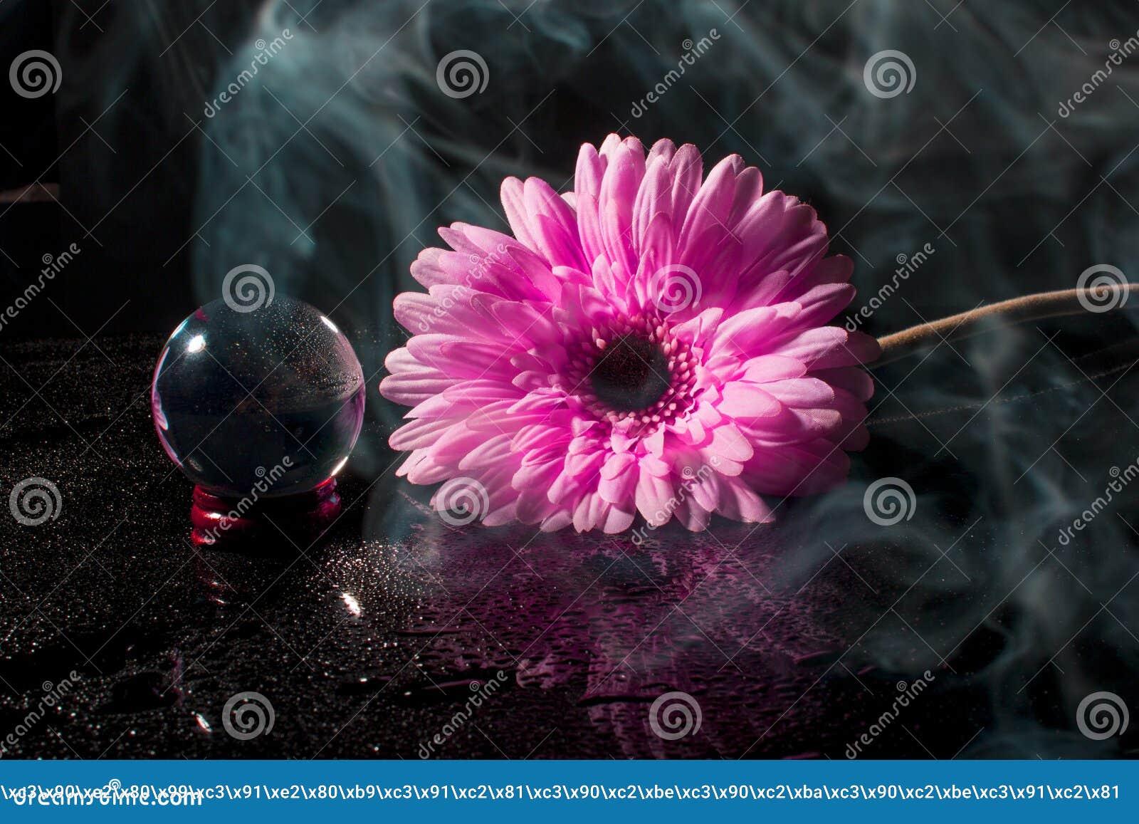 Roze gerbera op een zwarte achtergrond met waterdalingen