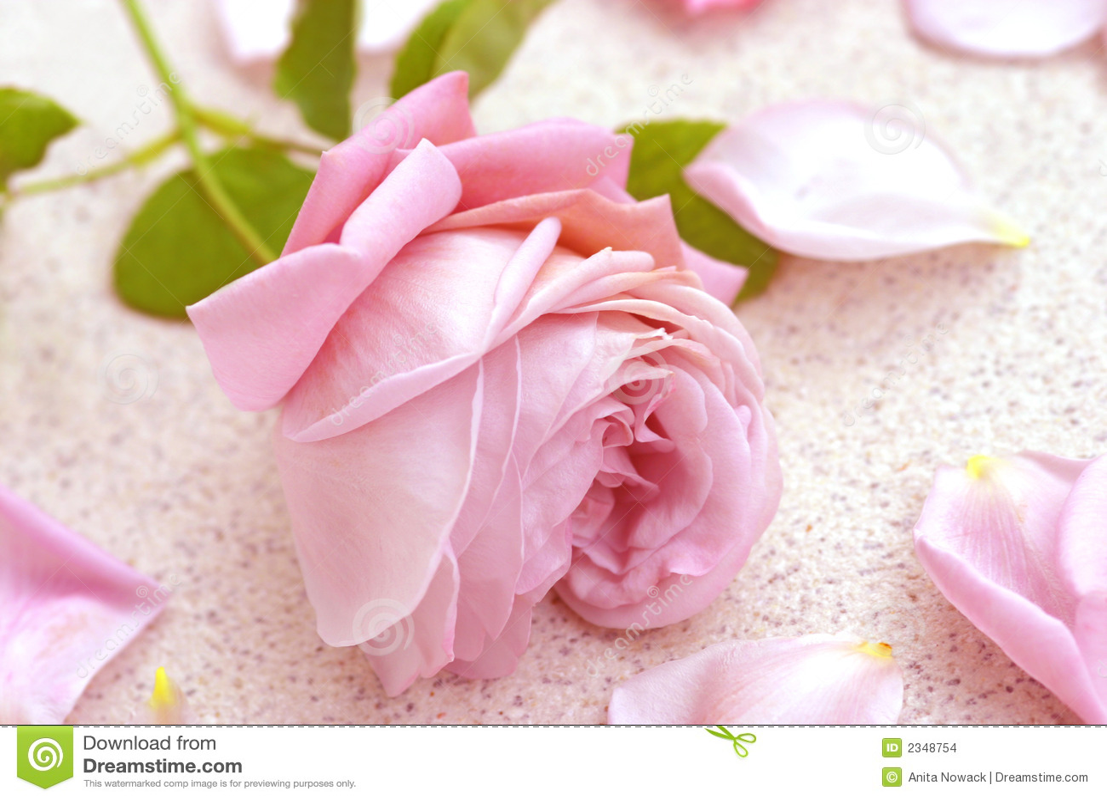 Roze nam over bloemblaadjes toe
